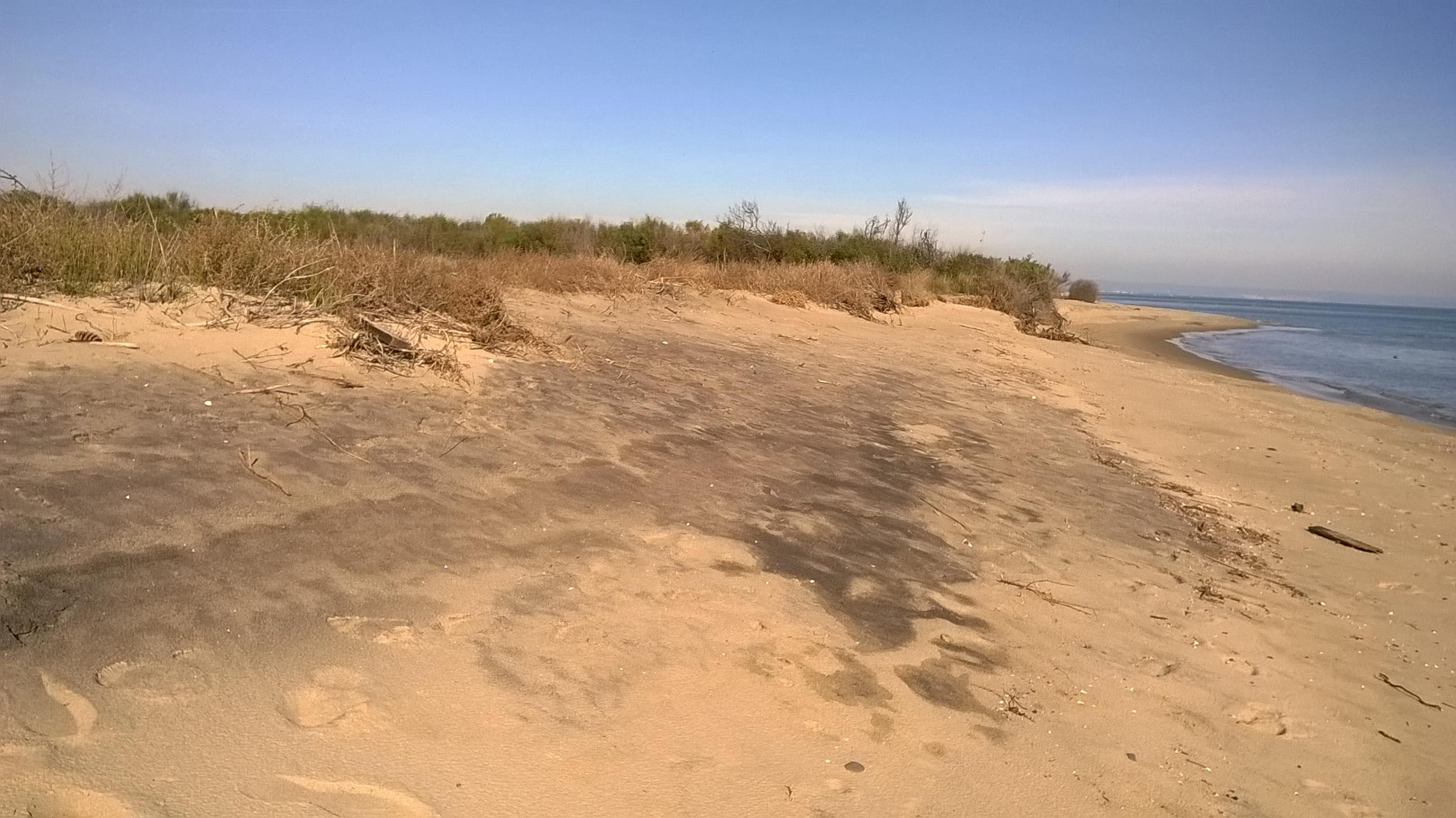Il comune di bernalda nasconde i verbali sulla for Disegni della casa sulla spiaggia