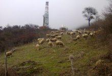 C'è più piombo nei reni degli ovini di Tempa Rossa che in quelli cinesi.